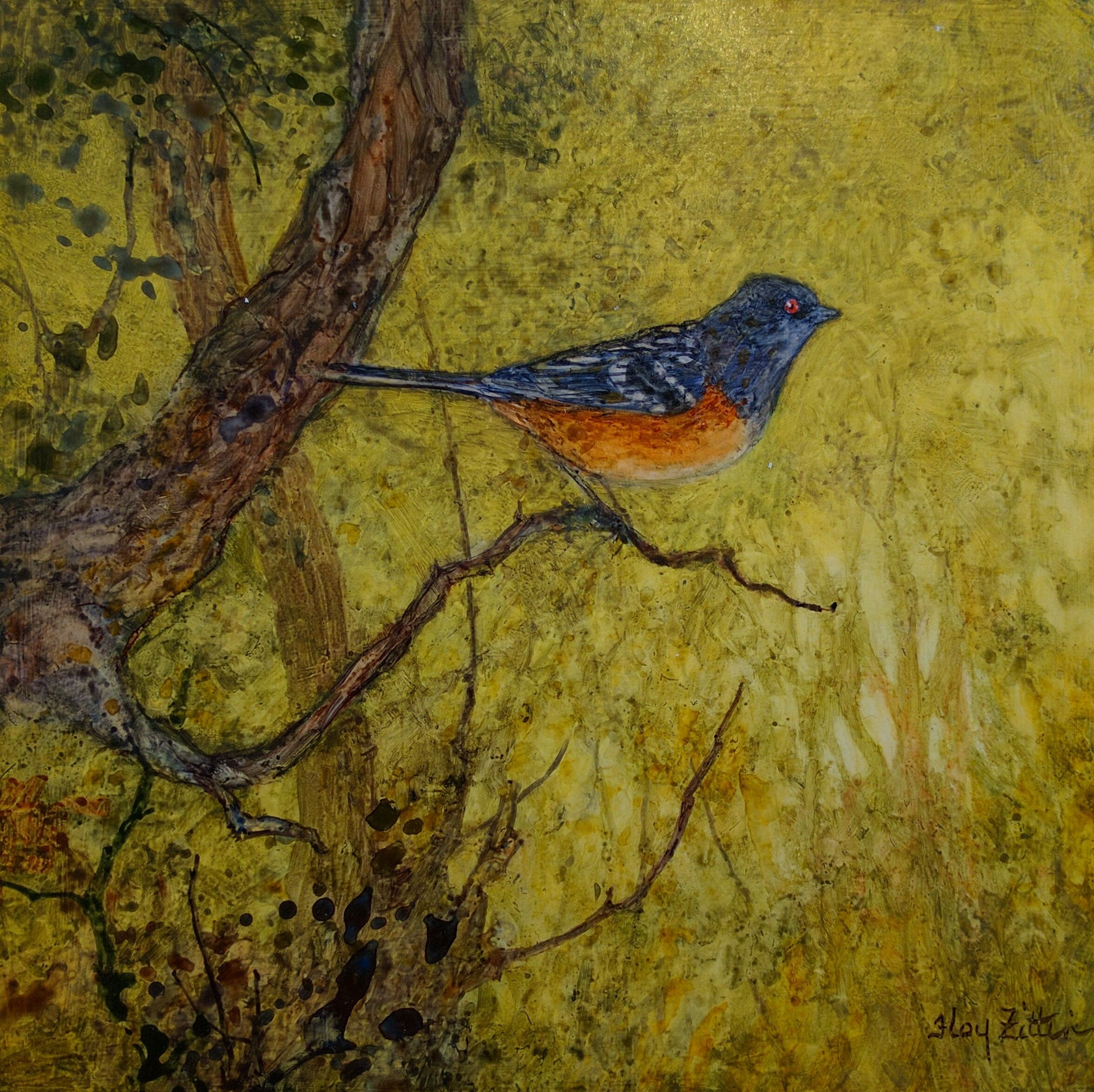 """""""Spotted Towhee"""" by Floy Zittin, size 8x8"""