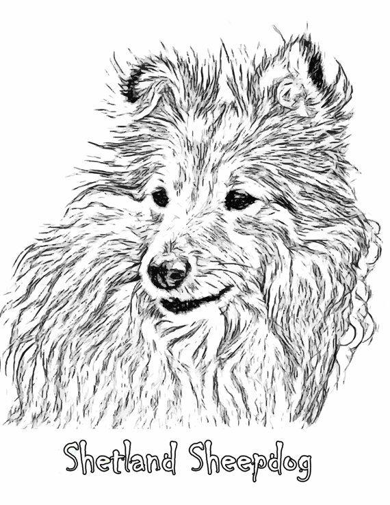 Sheepdog Art Print Sheltie Dog Line Art Sheltie Dog Art Drawing