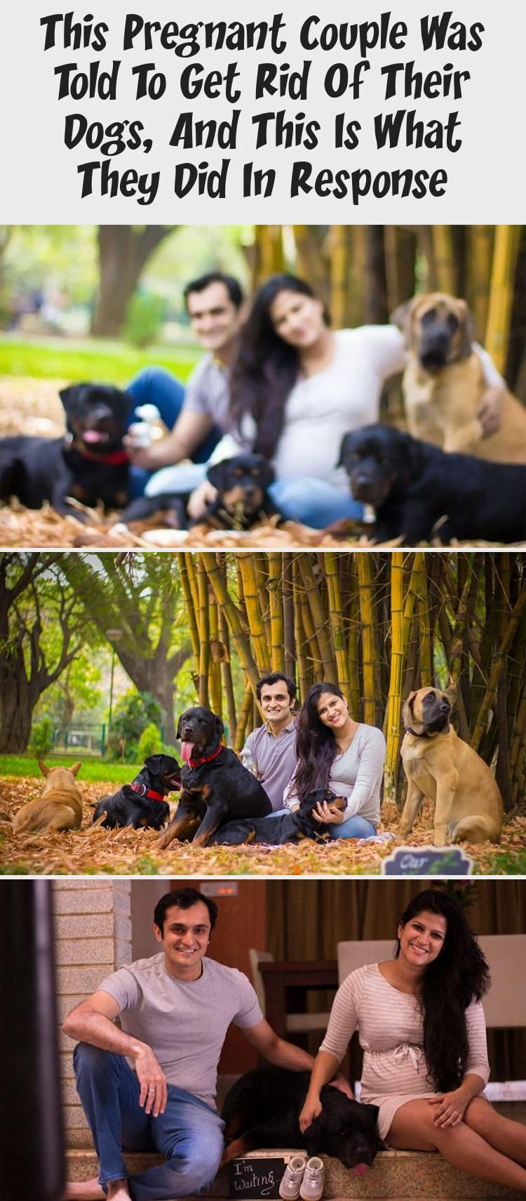 This Pregnant Couple Was Told To Get Rid Of Their Dogs And This