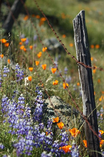 Just Reminds Me Of Walk In The Country Old Fence Post And Rust Barbed Wire I Will Have Similar Looks Along My Fence Country Fences Old Fences Wild Flowers