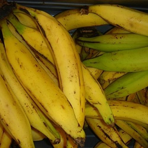 Pin By Jud Sloan On Health Plantains Ripe Plantain Banana Seeds
