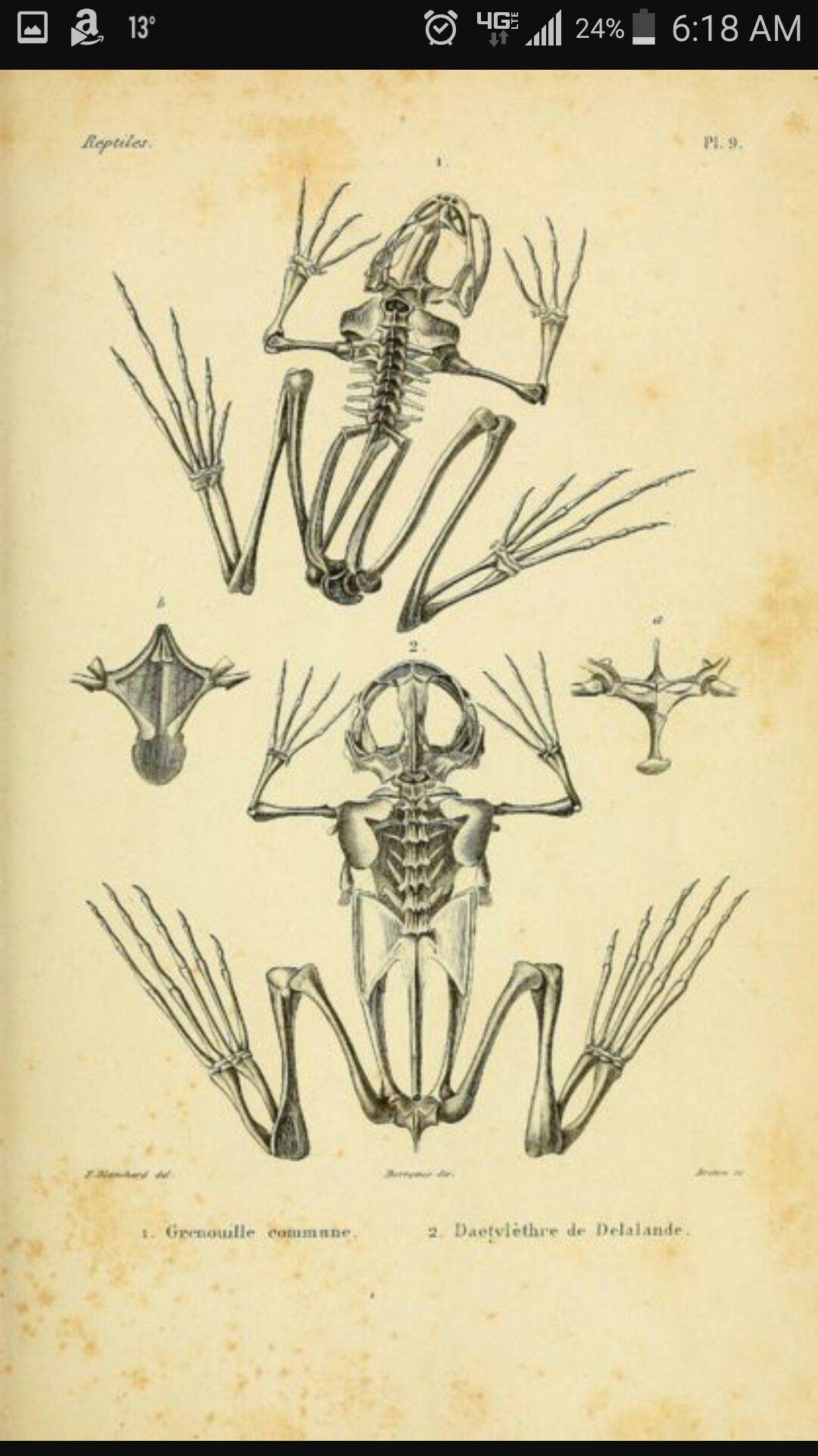 Pin de Steven Hawkins en Mmmboard | Pinterest | Anatomía animal ...