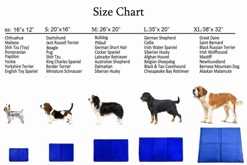 Mini Australian Shepherd Puppy Weight Chart In 2020 Australian Shepherd Mini Australian Shepherds Shepherd Puppies
