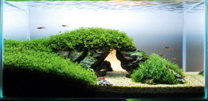 Fish tank ideas famous landmark in your aquarium features practical fishkeeping - Design aquasacpe ...