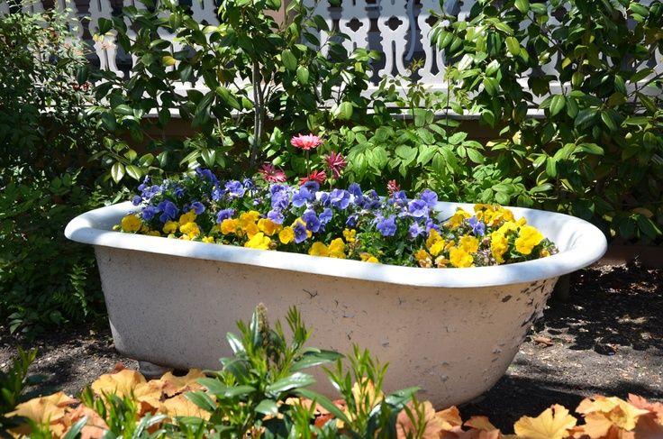 Recyclage de la vieille baignoire qui avait perdue son reflet vient embellir le jardin comme boîte à fleurs.