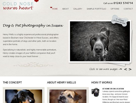 Stories About Available Dogs Pet Websites Dogs Pets