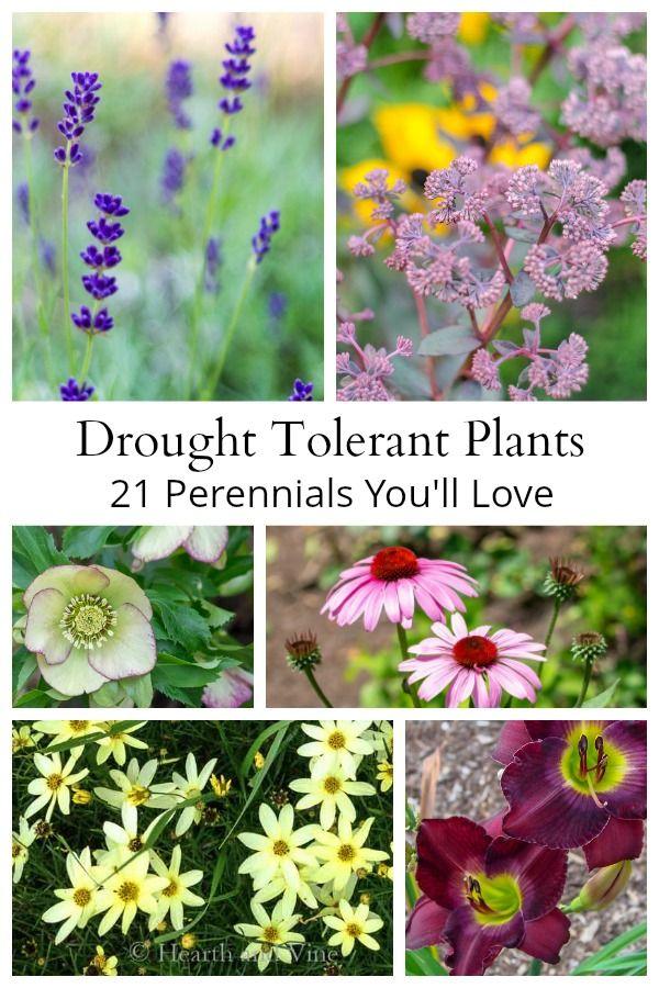 Drought Tolerant Plants - 21 Perennials You'll Love #shadeplantsperennial