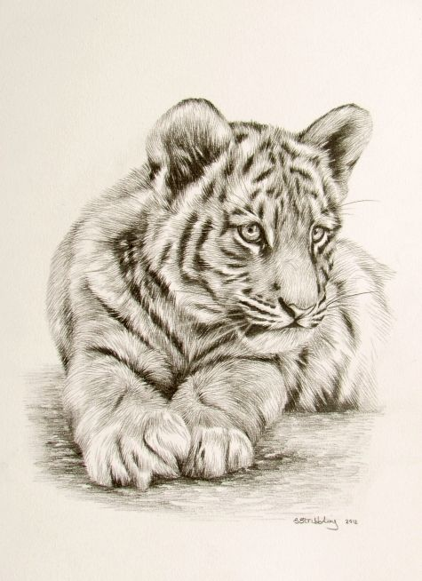 Easy realistic tiger drawings