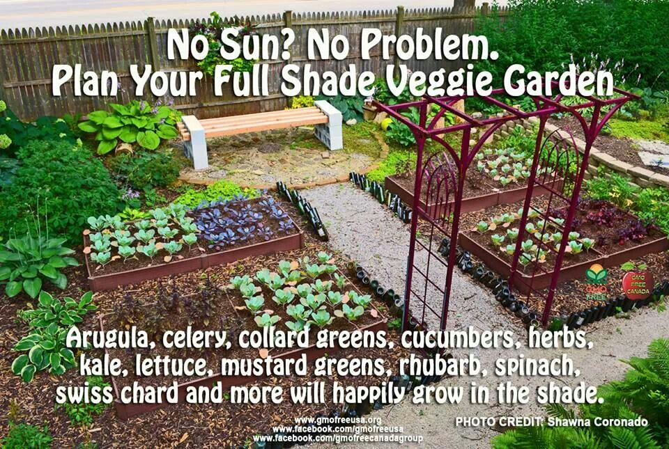 Shade Vegetables Image Only My Lil Garden Pinterest