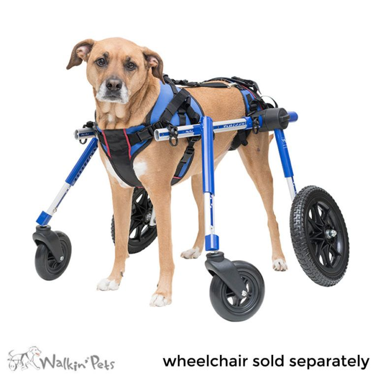 Full Support Large Dog Wheelchairs Walkin Wheels Dog