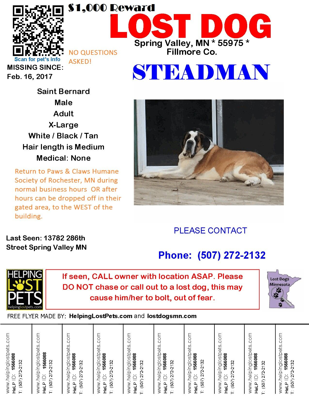 1000 Reward Dog Stolen With Images Losing A Dog Dogs Saint Bernard