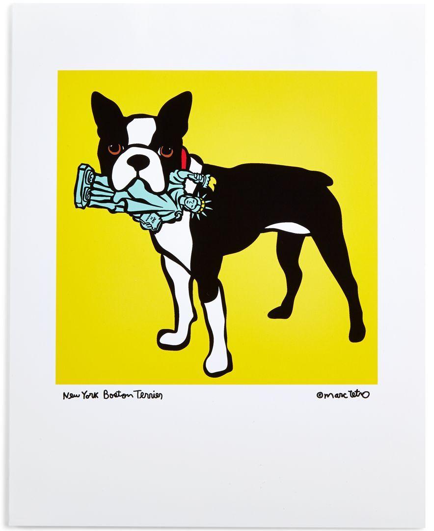 Marc Tetro Boston Terrier 8\