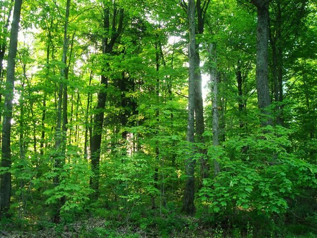 MLS# 145553 - NEW Listing! 93 acres in town of Enterprise.  Adjoins thousands of acres of Oneida County Forest Land.  Enrolled in MFLO.
