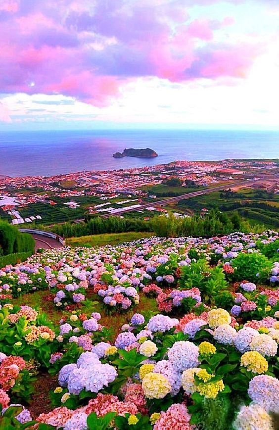 Pin By Sean Hudson On Beautiful Places Beautiful Flowers Beautiful Nature Beautiful Places