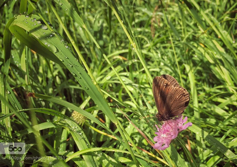 Una Farfalla  Scatto fatto per caso mentre si proseguiva per l'escursione della giornata.  Si è posata e si è fatta immortalare.