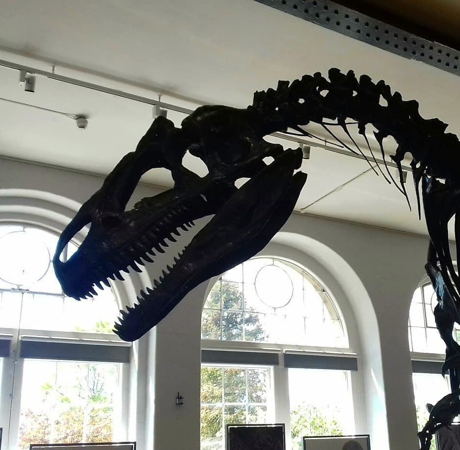 Deep down inside.. there's a dinosaur kid   history  dinosaur  paleontology  skeleton  fossil  museum  lapworth  ThatsAnAllosaurusBaby!  NotABabyAllosaurusThatsJustHowIShowEnthusiasm #historyofdinosaurs Deep down inside.. there's a dinosaur kid   history  dinosaur  paleontology  skeleton  fossil  museum  lapworth  ThatsAnAllosaurusBaby!  NotABabyAllosaurusThatsJustHowIShowEnthusiasm #historyofdinosaurs Deep down inside.. there's a dinosaur kid   history  dinosaur  paleontology  skeleton  fossil #historyofdinosaurs