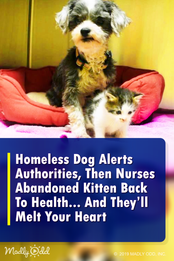 Homeless Dog Nurses Abandoned Kitten And They Ll Melt Your Heart