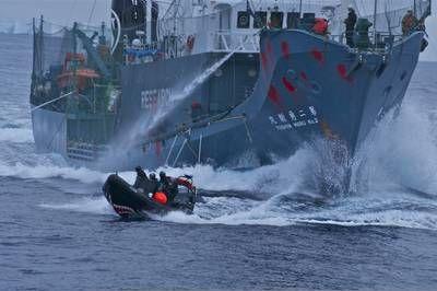 Animal Planet renews Whale Wars for season six