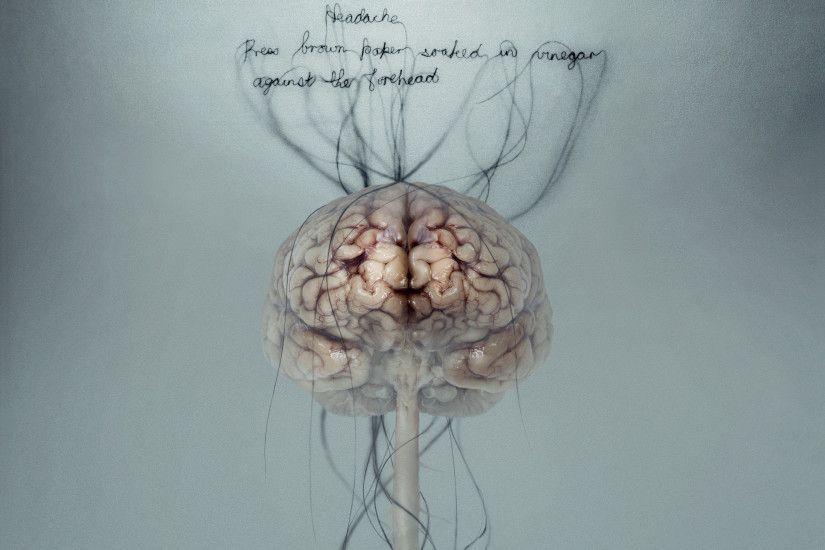 Head Anatomy Hd Wallpaper Brain Wallpapers 36 Wallpapers Adorable Wallpapers Brain Art Science Art Anatomy Art