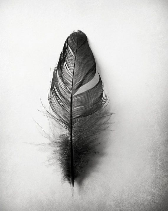 Feather photography grey black and white simple texture minimalist home decor 10x8 black feather