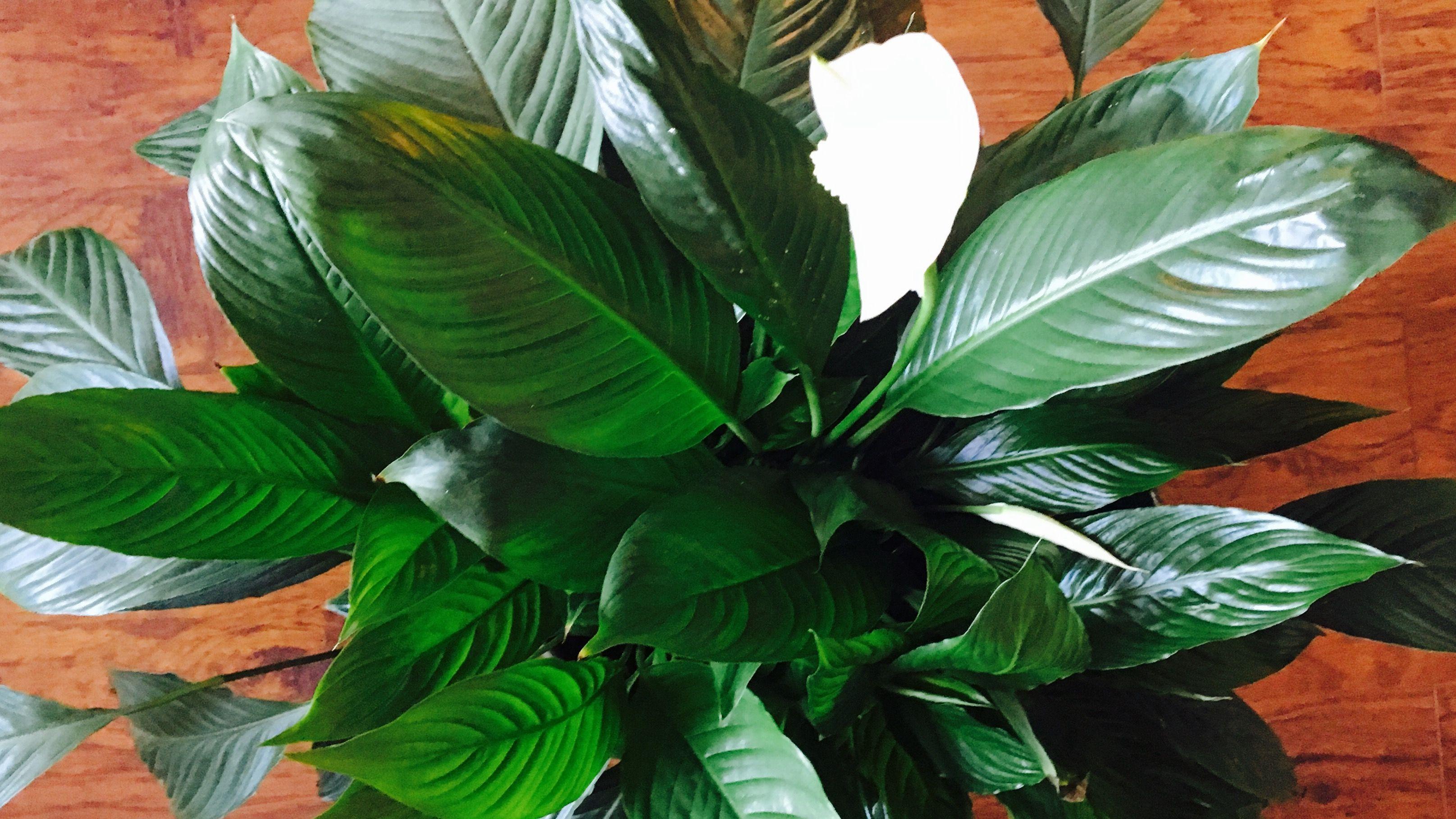 Jakie Rosliny Warto Miec W Domu Ekoistycznie Plant Leaves Plants Leaves