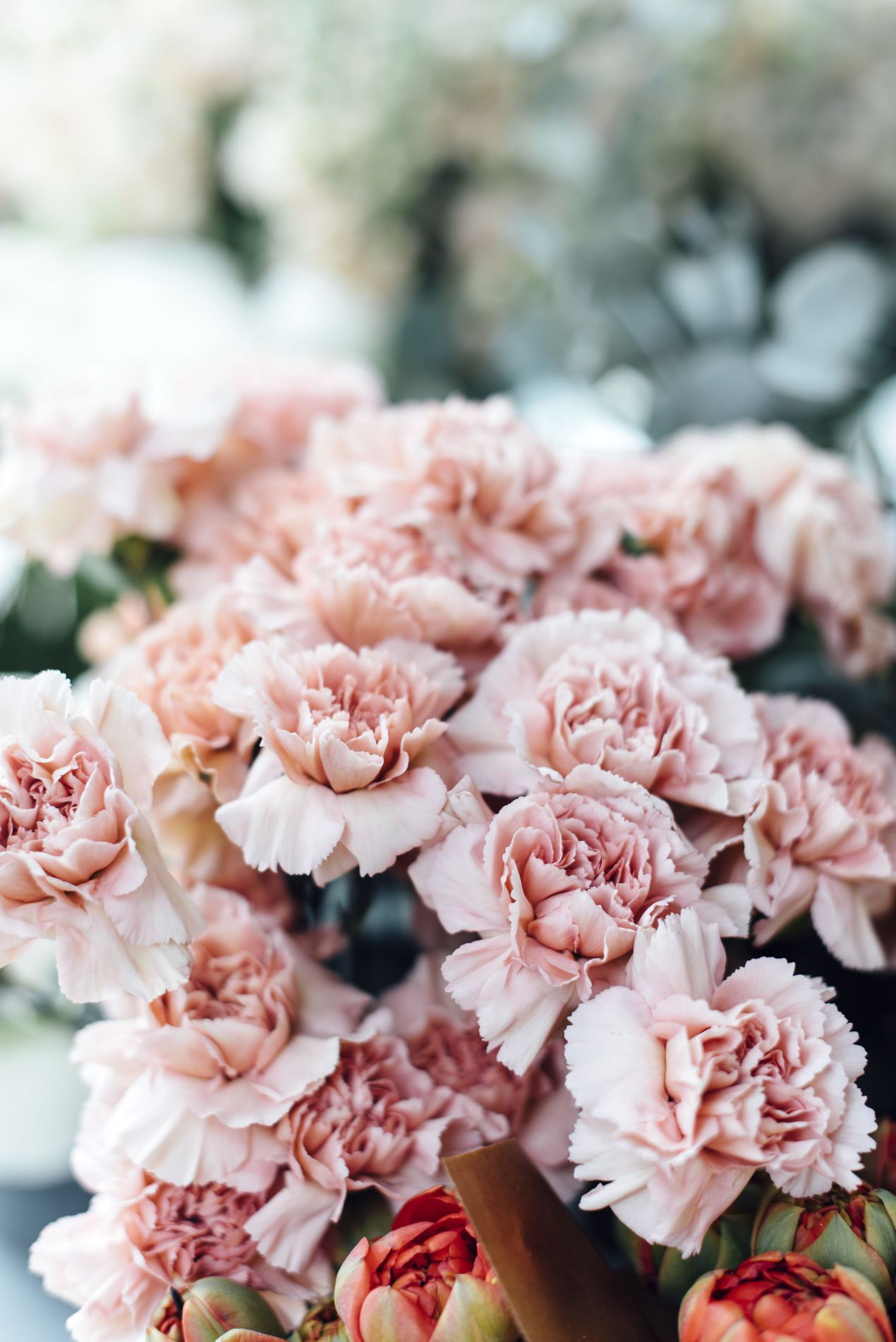 6 Reasons Why The Carnation Deserves A Comeback Different Kinds Of Flowers Flowers Carnation Flower