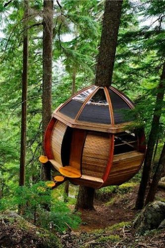 Pin By Storm Strait On Tree House Pinterest Cabane Maison And