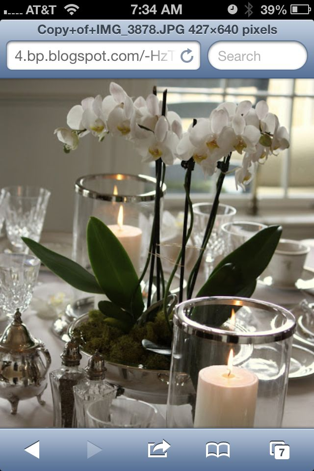 I Love The Idea Of Having Orchid Plant Centerpieces At A Wedding