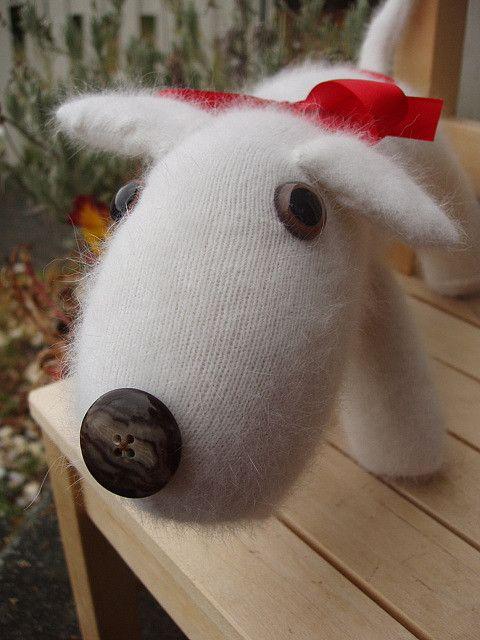 Info's : sock dog