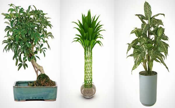 15 plantas de interior perfectas para pisos de ciudad for Cuales son las plantas para interiores