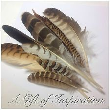 NEW!! Mix of 7 Very Natural Owl/Pheasant/Eagle feathers for craft/millinery/Vase