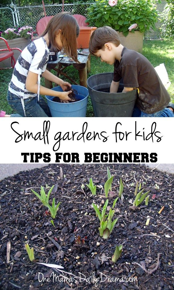 Small gardens for kids: tips for beginners | from One Mama's Daily Drama --- Now is the time to plan a spring or summer garden! These tips are really handy, especially number 2.