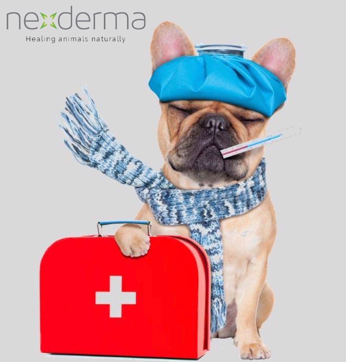 At Nexderma We Are Focused On Creating State Of The Art Products For Advanced Dermatological Healing Nexderm Dog Illnesses Pet Wound Care Natural Wound Care