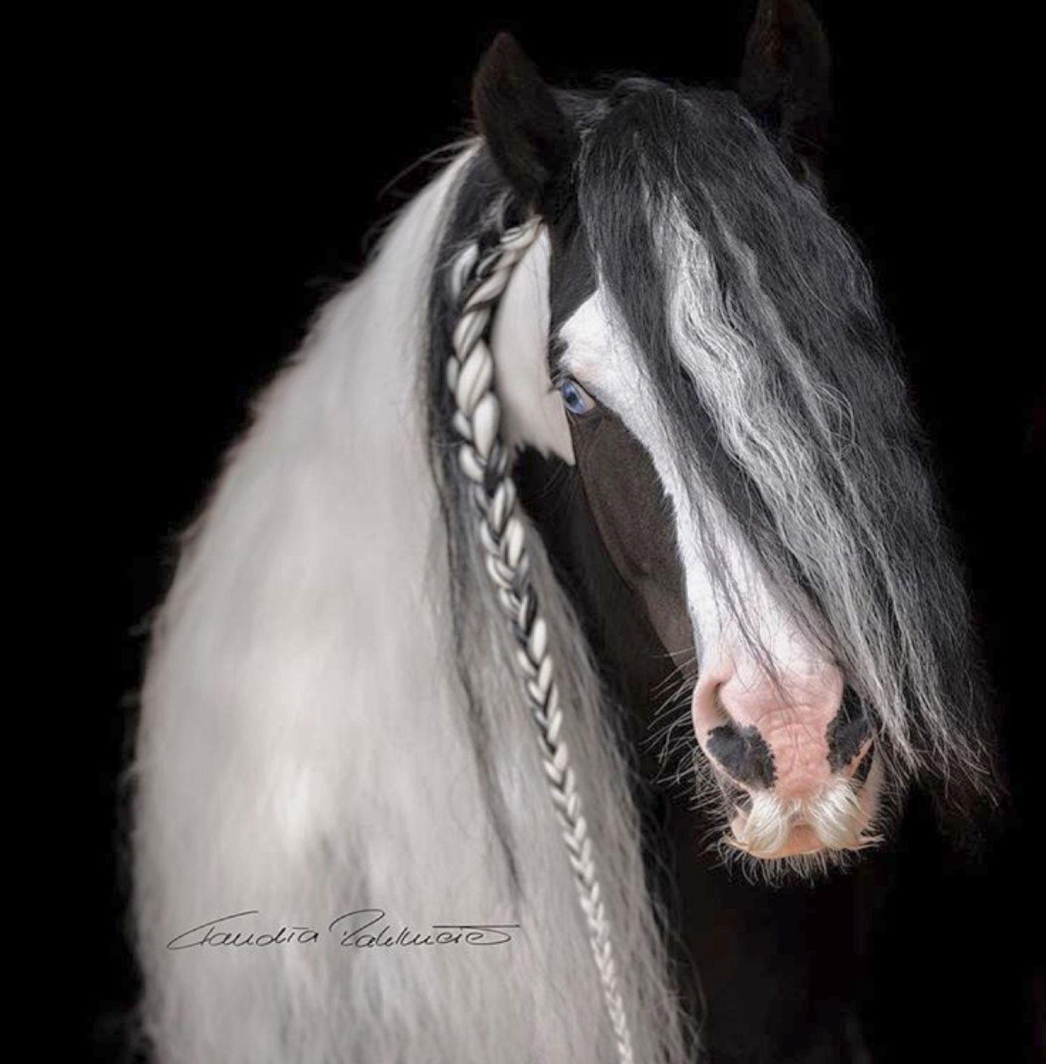 Pin On Love Of Draft Horses
