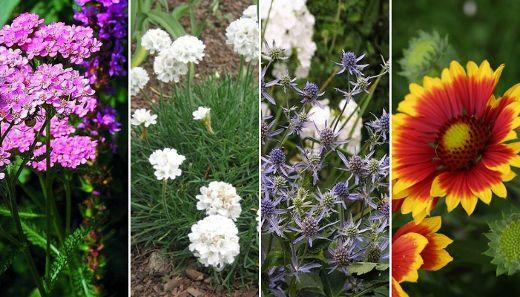 Byliny Wieloletnie Dlugo Kwitnace Cale Lato I Jesienia Geraniums Plants Garden