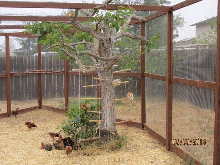 Chicken Yard Idea In 2020 With Images Chickens Backyard