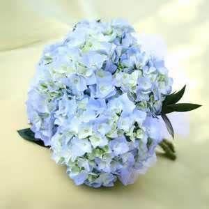 Image Detail For Cornflower Blue Wedding Flowers All Wedding Idea Cornflower Blue Wedding Hydrangea Bridesmaid Bouquet Wedding Flowers Blue Hydrangea