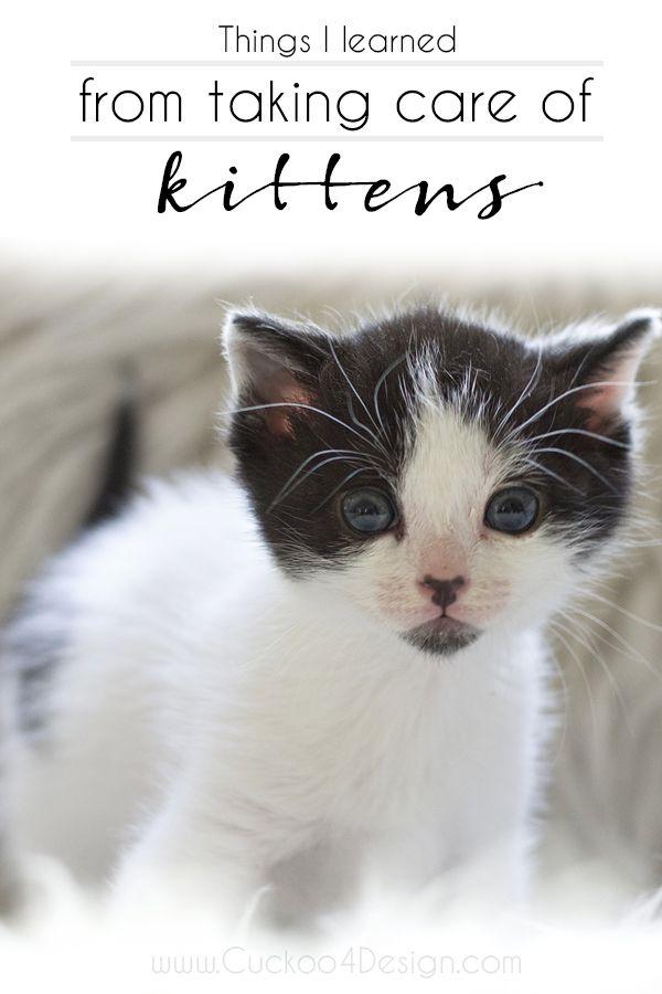 What I Ve Learned From Caring For Kittens Kitten Care Kittens Taking Care Of Kittens