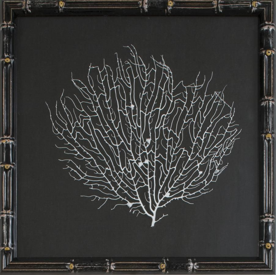 White sea fan linens fans and white sea natural coral sea fan finished in white lacquer and floated on black linen with black lacquer amipublicfo Images