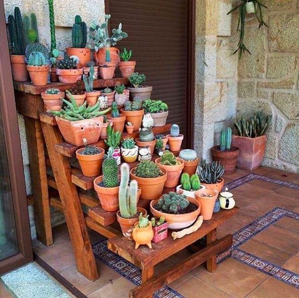 Cuidados com cactos; dicas para iniciantes – O Meu Jardim