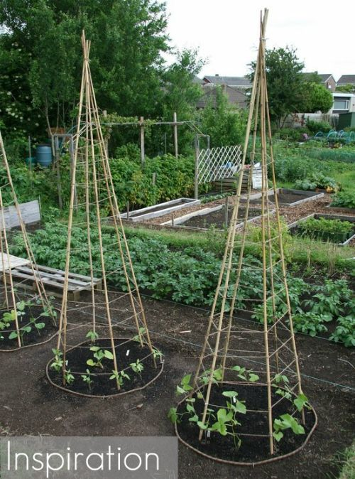 Nice Pinterest Challenge: DIY Bean Teepee Garden Supports   17 Apart: Pinterest  Challenge: DIY