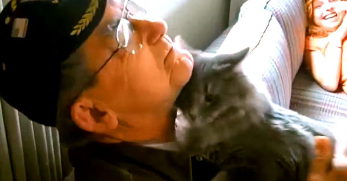 Cats Who Have Missed Their Humans Cats Animals Hello Kitten