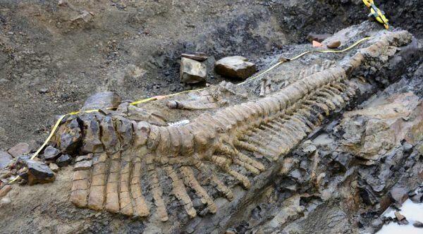 La Tercera On Twitter Fósiles De Dinosaurios Animales De La Prehistoria Ilustración De Dinosaurios