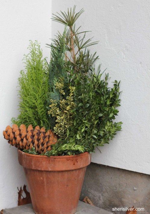 winter evergreen pot container garden pinterest. Black Bedroom Furniture Sets. Home Design Ideas