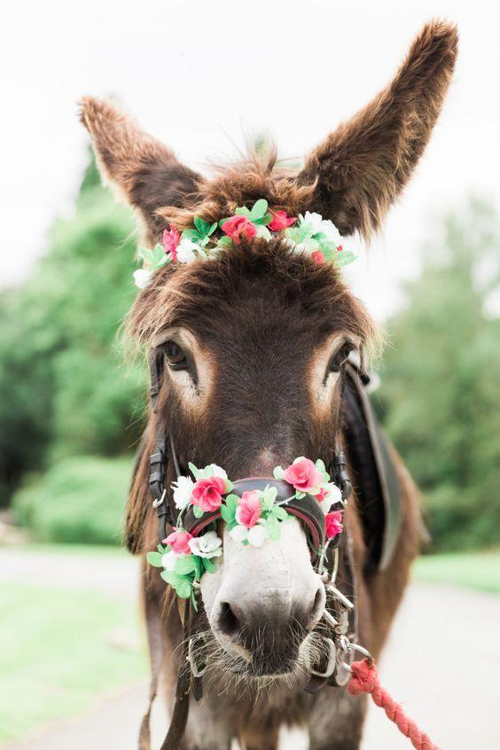 Pin by KENDA DAVIS 3Peat on Donkey & Mule Cute donkey