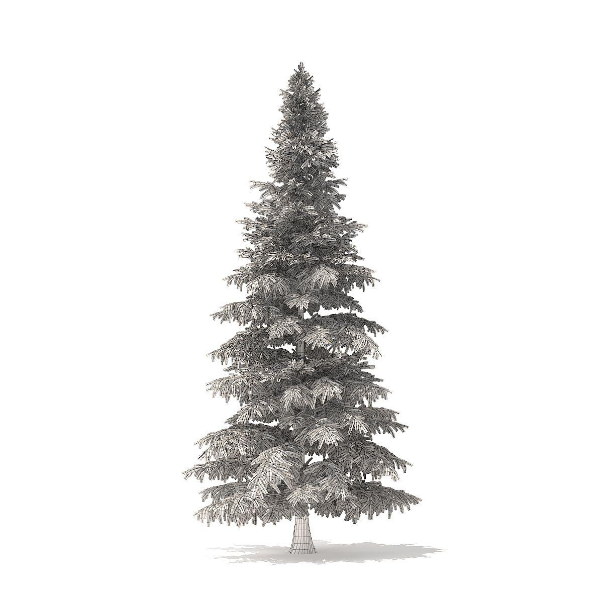 Spruce Tree 3d Model 8m Spruce Tree Model Spruce Tree Tree 3d Model