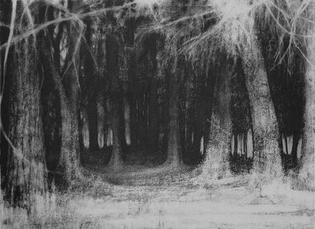 Elaine Green Into The Forest 2012 Charcoal On Paper 29 X 37 Inches Charcoal Drawing Charcoal Artwork Landscape Drawings