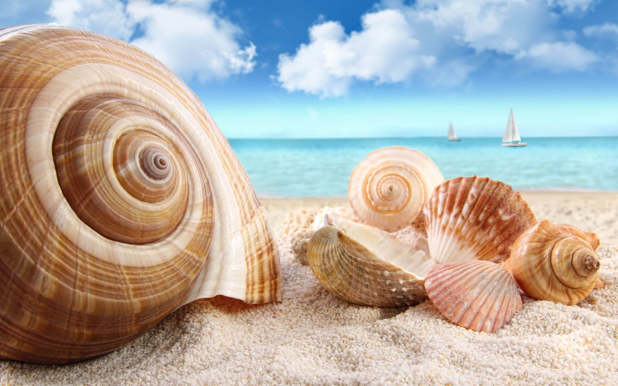 Seashells Beach Hd Wallpaper Download Awesome Nice And