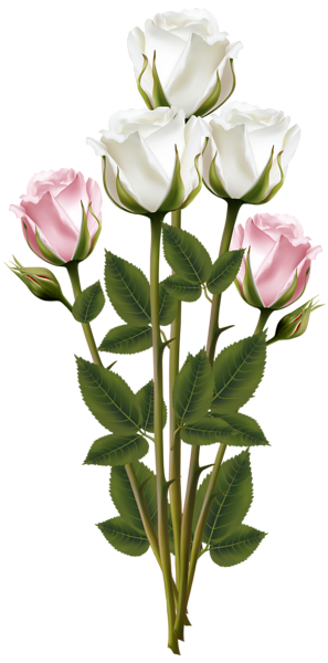 Pin de martha e em clipart | Pink rose bouquet, White ...