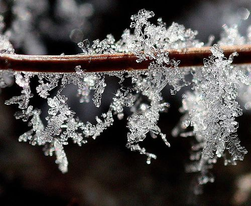 Ice crystals with their exquisite jewel-like patterns sparkle on the bare tree branches!